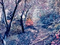 "074  PINK STAIRCASE – HUNTINGTON LIBRARY GARDEN ACRYLIC ON CANVAS 78"" X 29"" IN A PRIVATE COLLECTION – BEL AIR, CALIFORNIA"